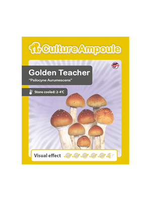 Golden Teacher - Culture Ampoule