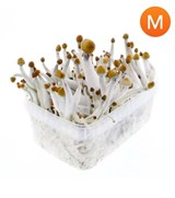 Cambodian All in One Growkit - Medium