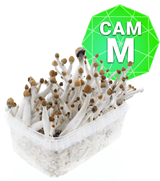 Cambodian Growkit - Medium