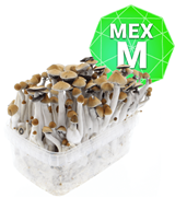 Mexican GrowKit - Medium