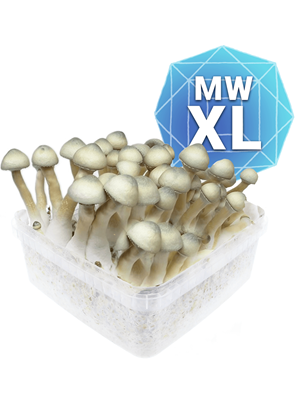Milky Way Growkit - Xl
