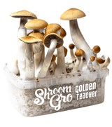 ShroomGRO Combo - Golden Teacher