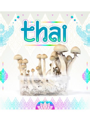 Thai - Magic Mushroom Growkit