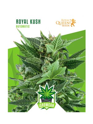 Igrowcan - Royal Kush Automatic